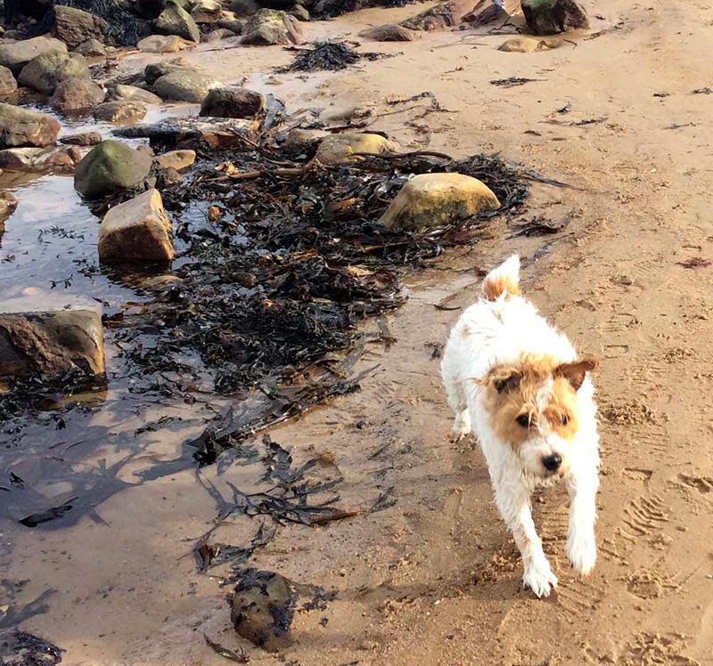 Toby foxy russell Beach