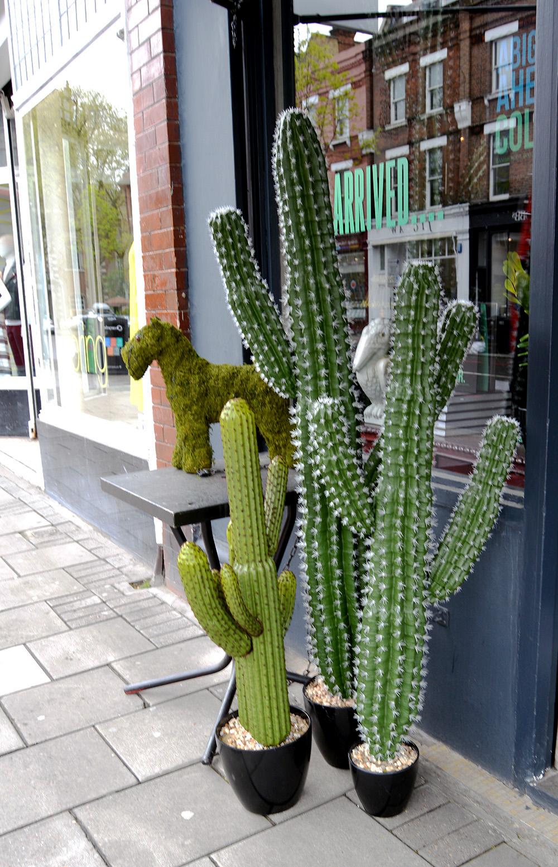 cactus pillarboxblue.com