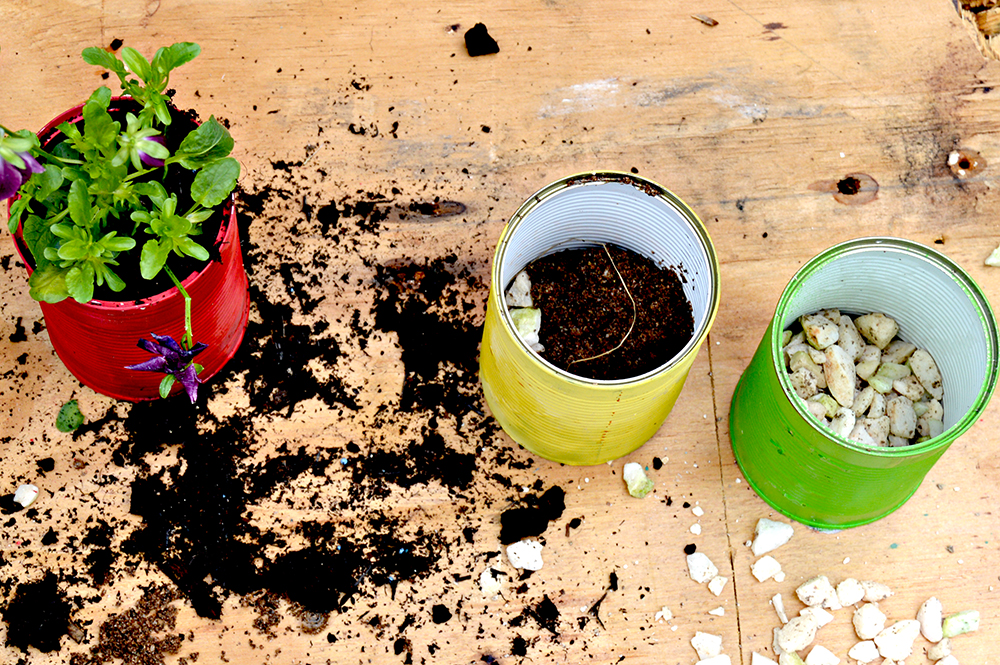 Planting the tin can planters