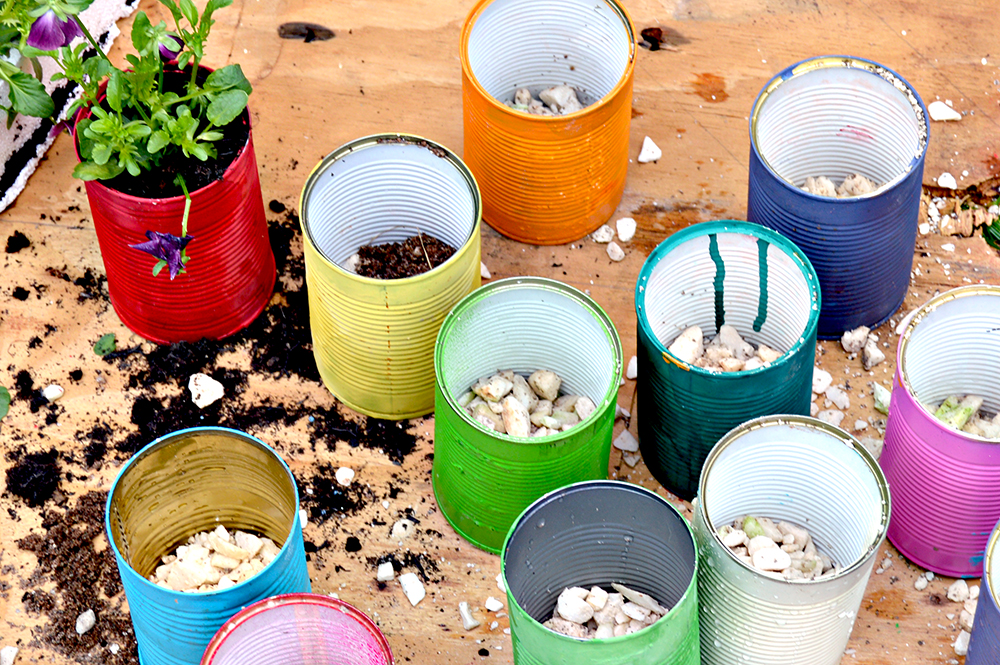 Preparing the tin can planters for planting