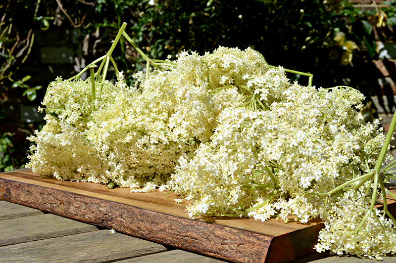 Elderflowers on wood2