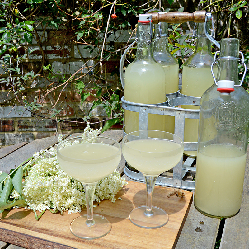 Homemade Elderflower Champagne Pillarboxblue
