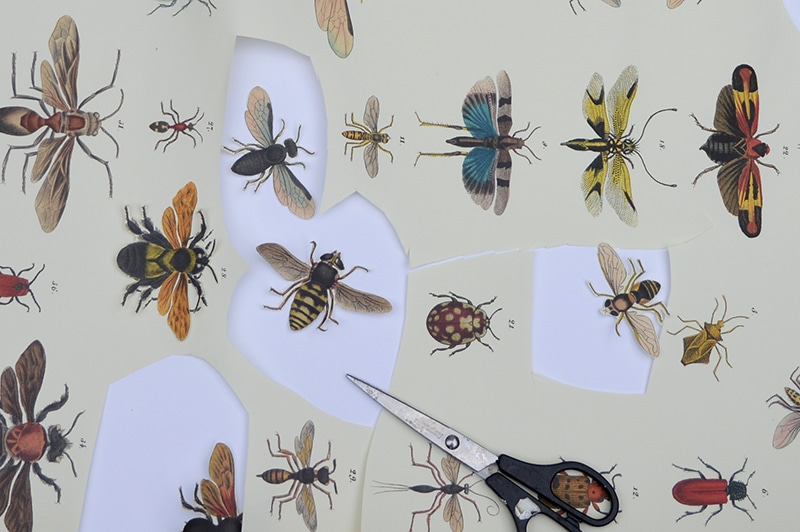 cutting out insect