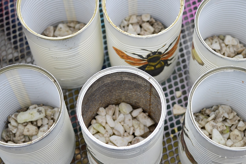 Putting stones in cans for planting