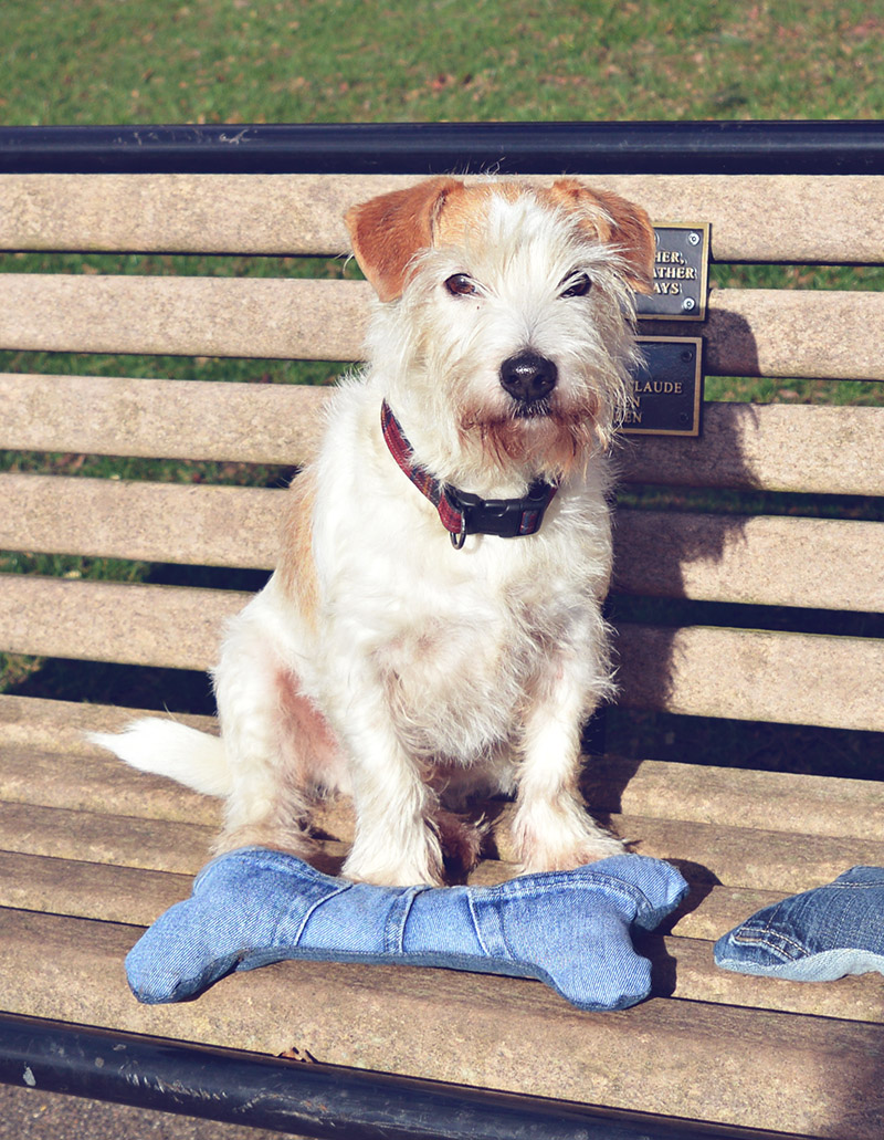 Buster with his denim handmade dog toy