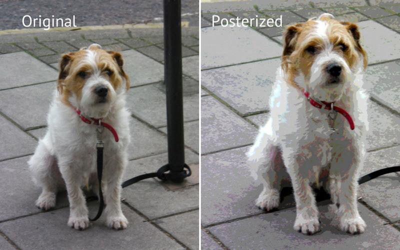 Posterized dog photo