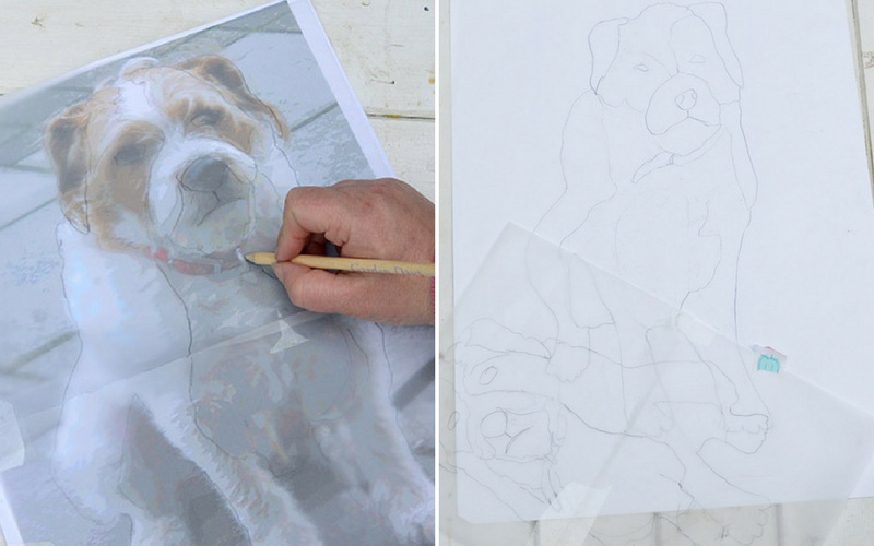 Tracing round dog photo