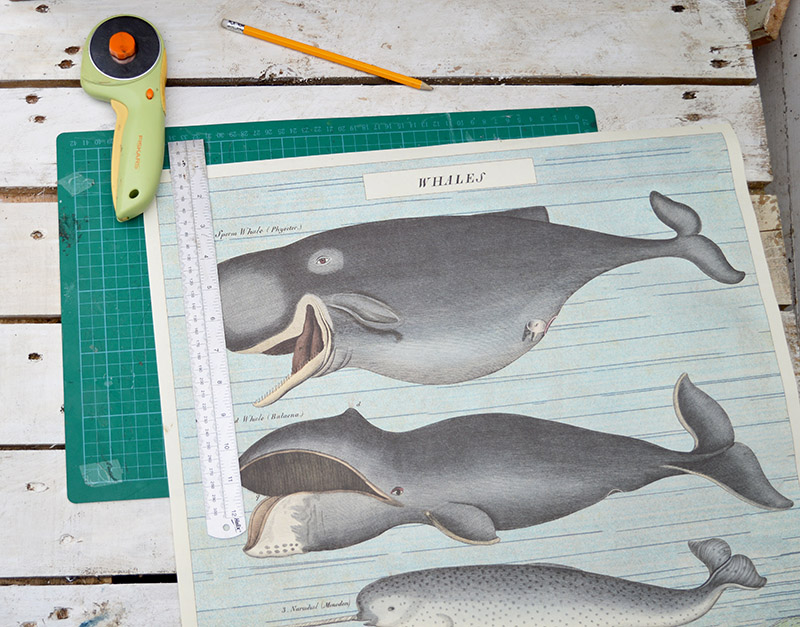 Whale gift wrap paper for drawer decoupage