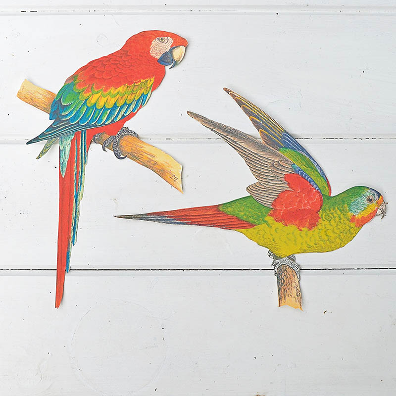 Macaws on transfer paper cut out
