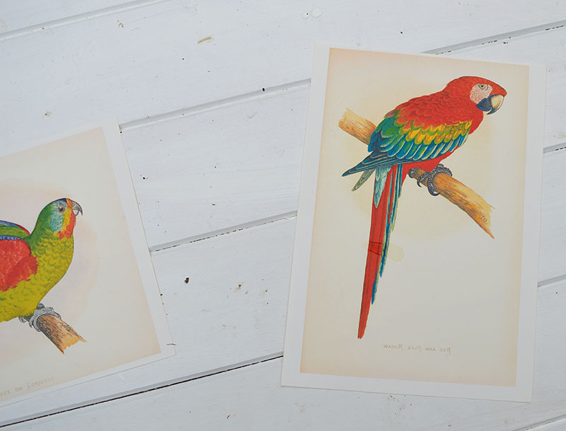 vintage bird images for upcycled bag