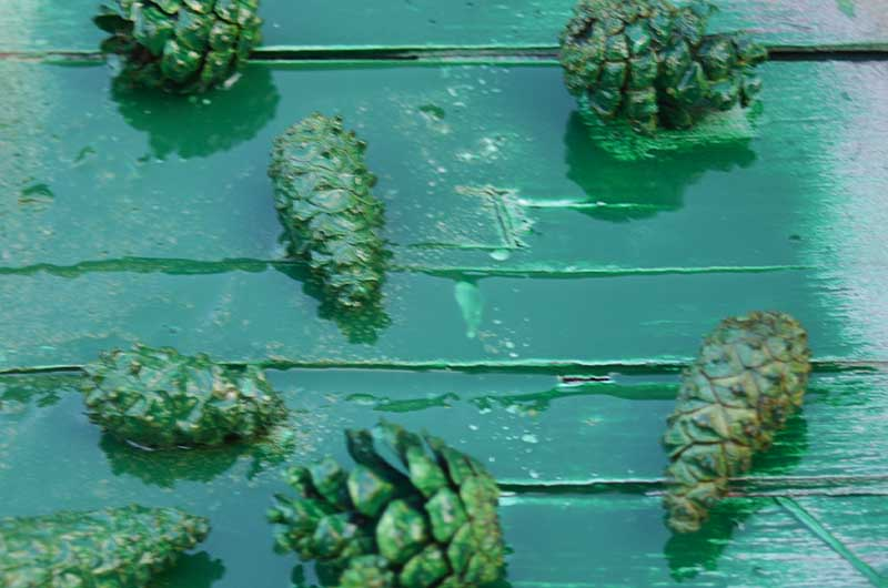 Green spray painted mini pine cones