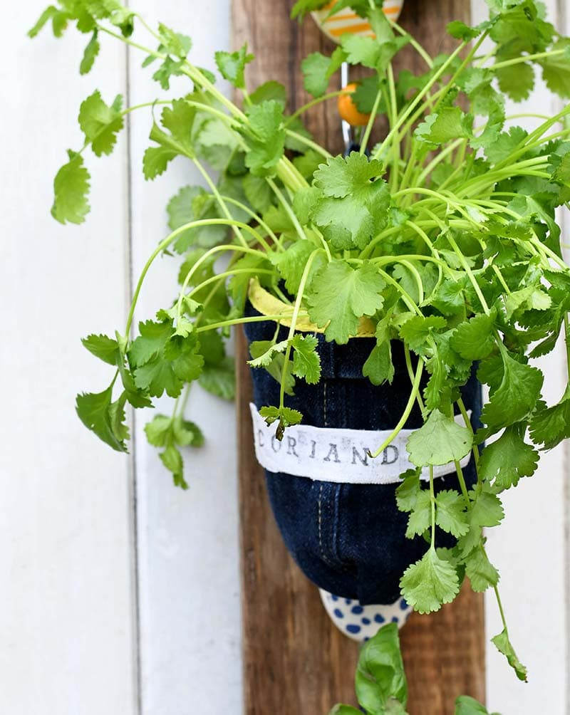 upcycled denim planter coriander