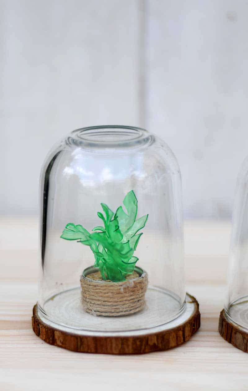 Upcycled Mini tropical plant in boho pot