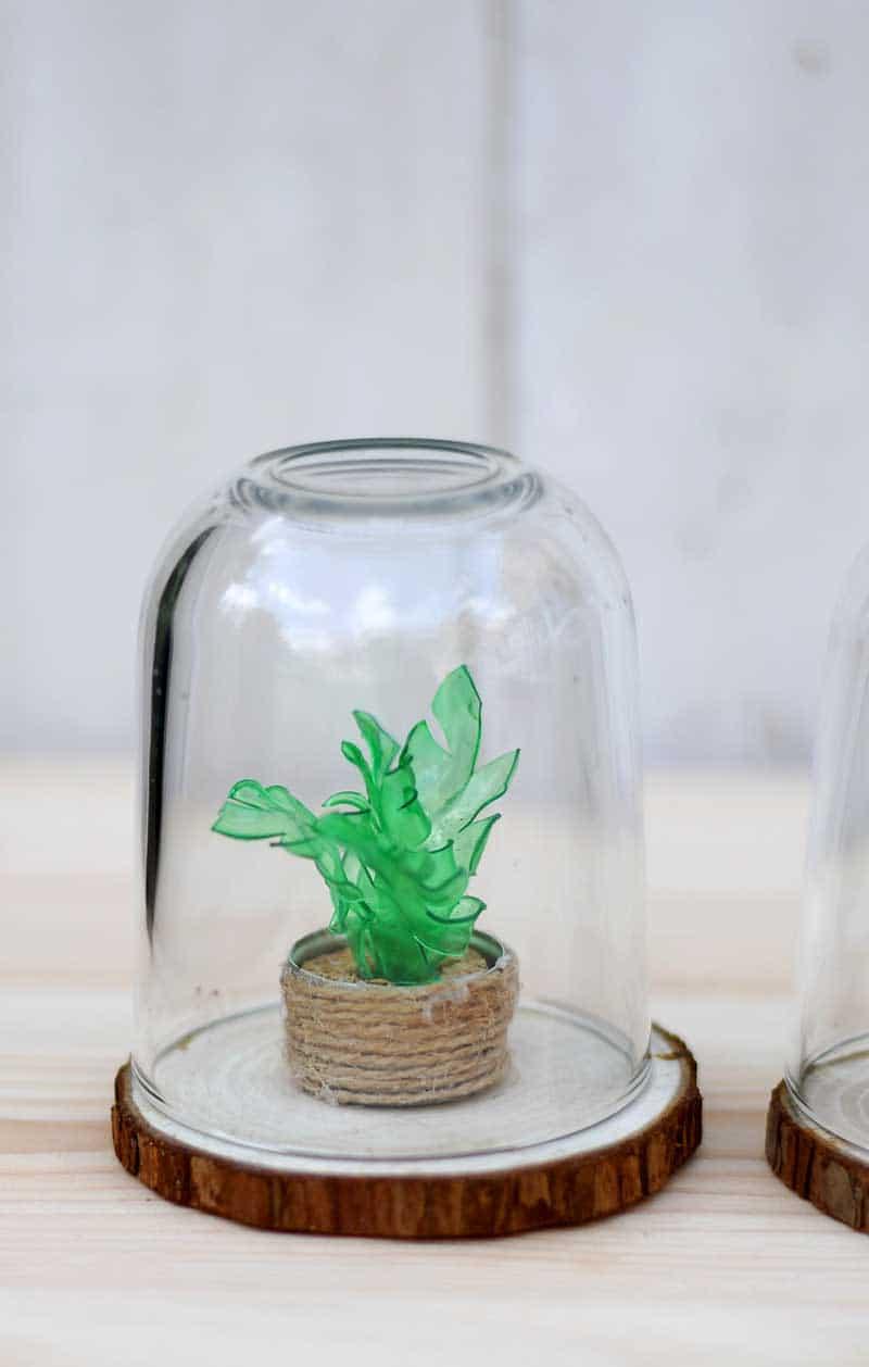 How To Make A Plastic Bottle Faux Succulents Terrarium