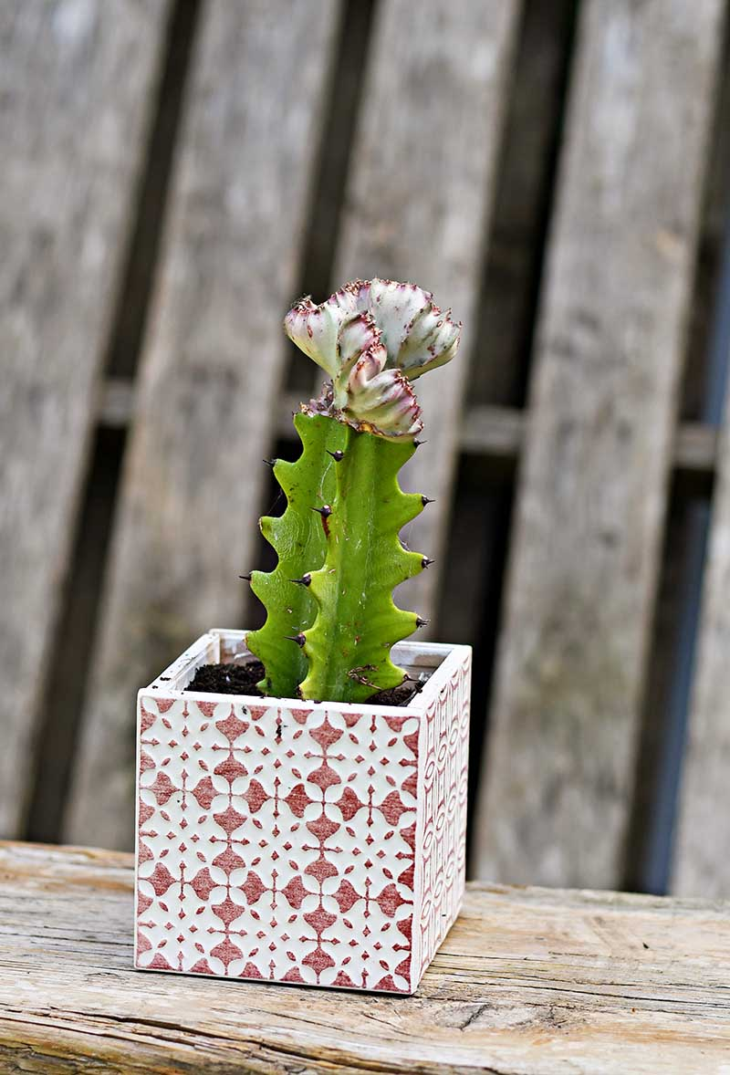 Square Tiled planter boho style in red