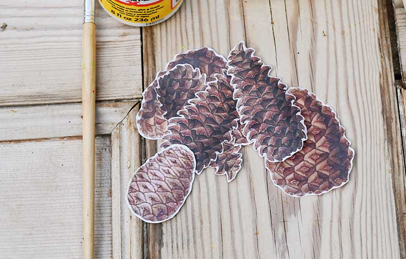 cut out pinecone images