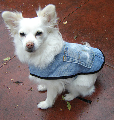 DIY dog accessories  denim doggy coat