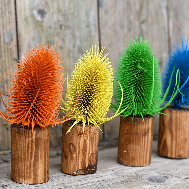 Rainbow painted dried thistle decoration.
