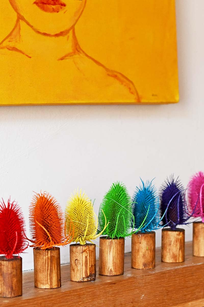 Rainbow coloured dried thistle decoration for Burns