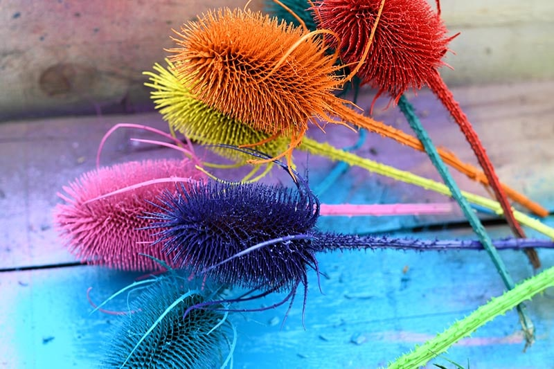 Rainbow spray painted dried thistles for a mantle decoration