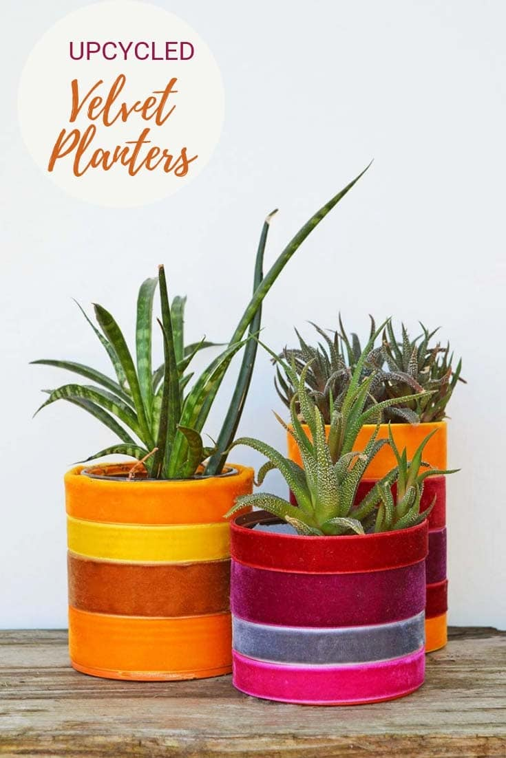 Velvet and tin can indoor planters