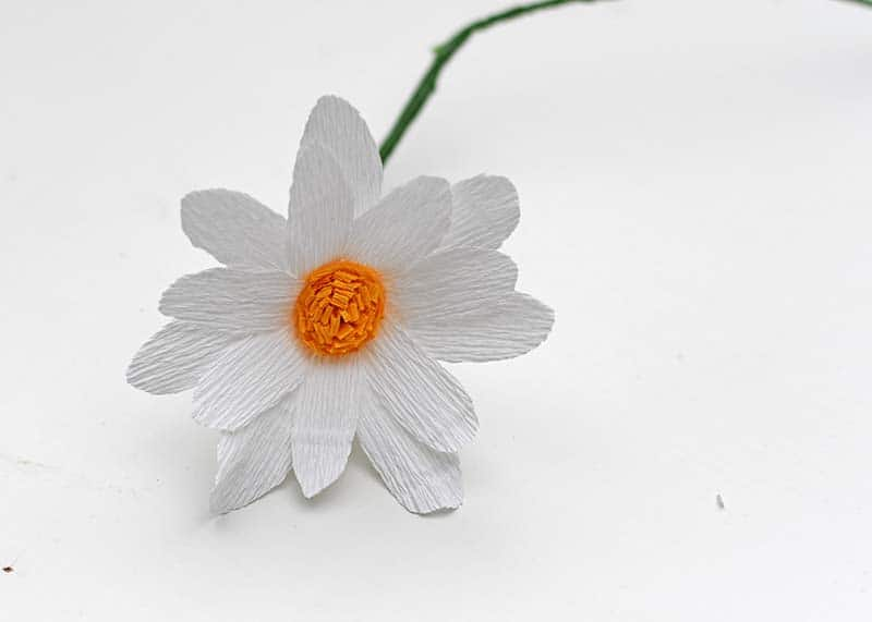 DIY crepe paper daisy