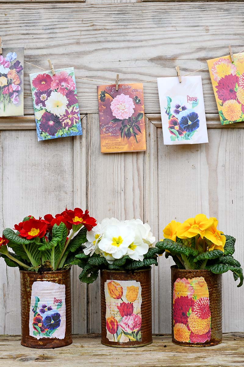 Vintage seed packet tin can planters