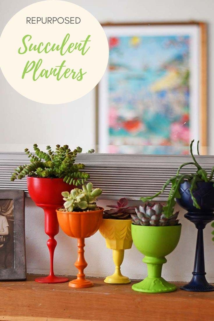 How To Make Repurposed Planters For Succulents - Pillar Box Blue Rainbow Succulent House Plant on elephant plant, aloe vera plant, skin care stonecrop plant, variegated jade plant, peperomia house plant, purple rose succulent plant, rainbow fern house plant,