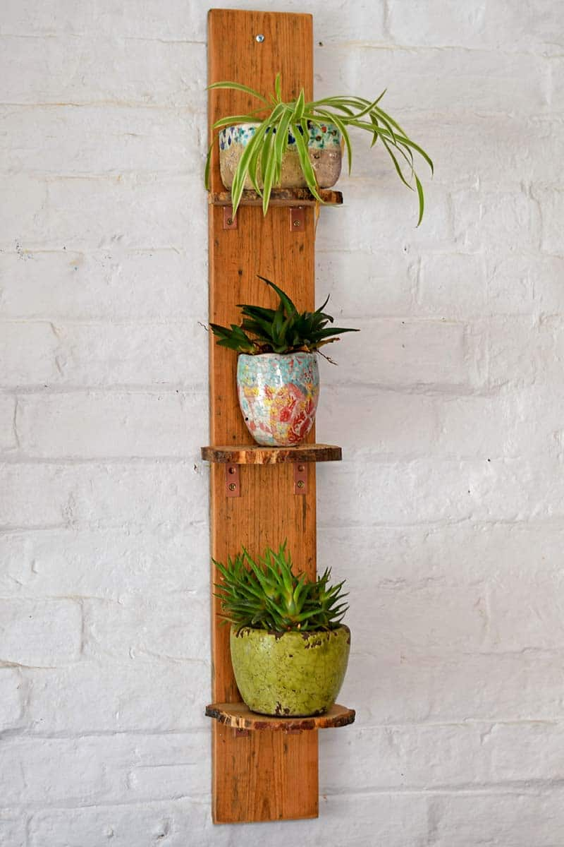 DIY plant shelves with a natural wood edge