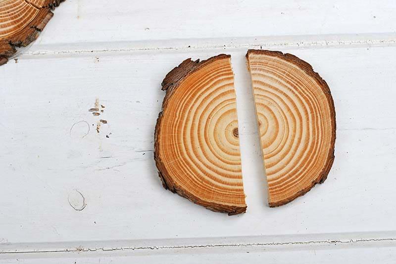 wood slice sawn in half