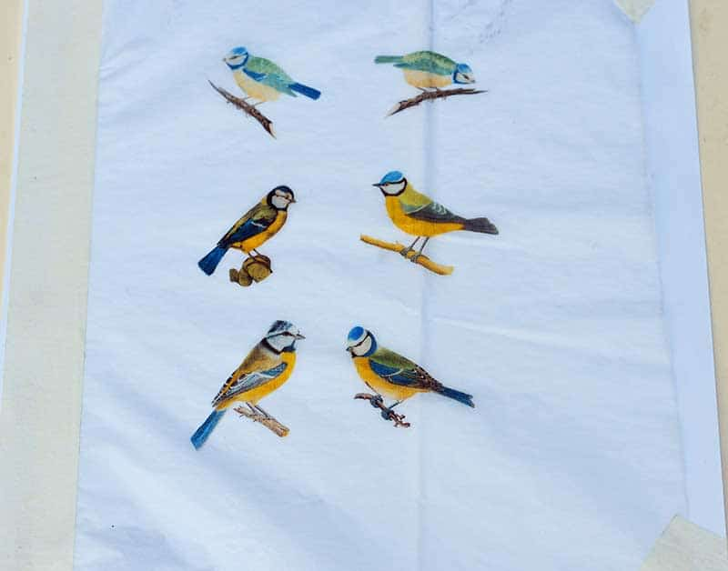 Printed birds on tissue paper