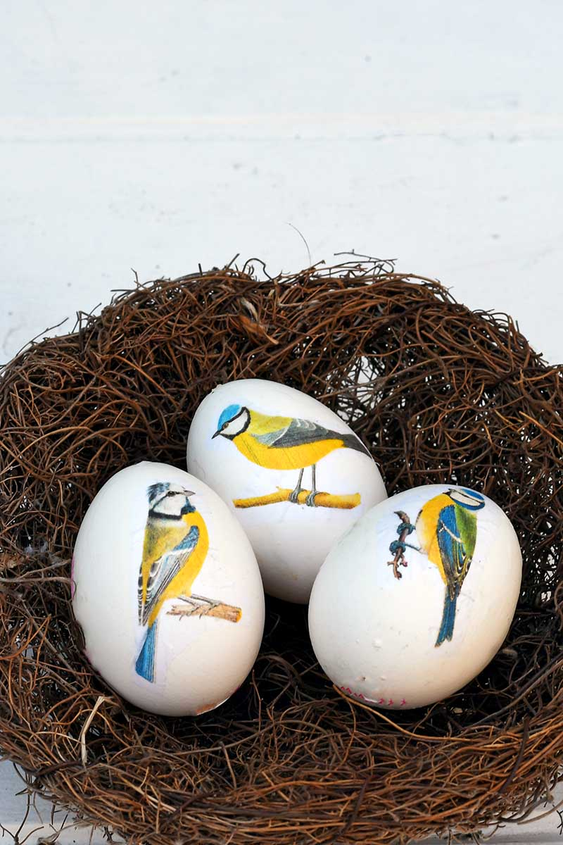 Blue tit decoupage eggs in a nest