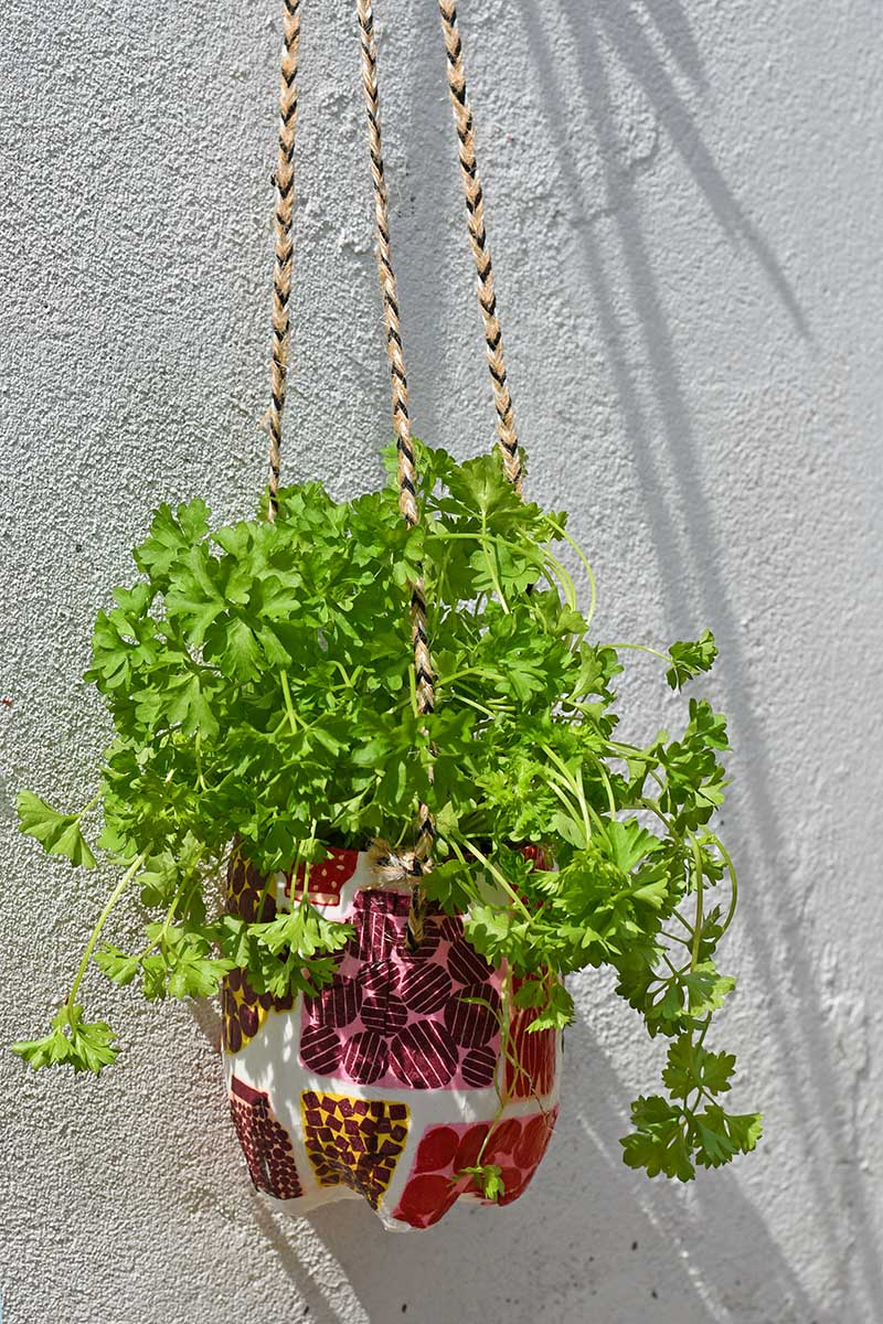 upcycled hanging herb planter