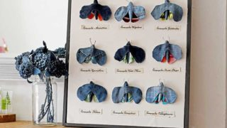 Upcycled denim framed moth taxidermy