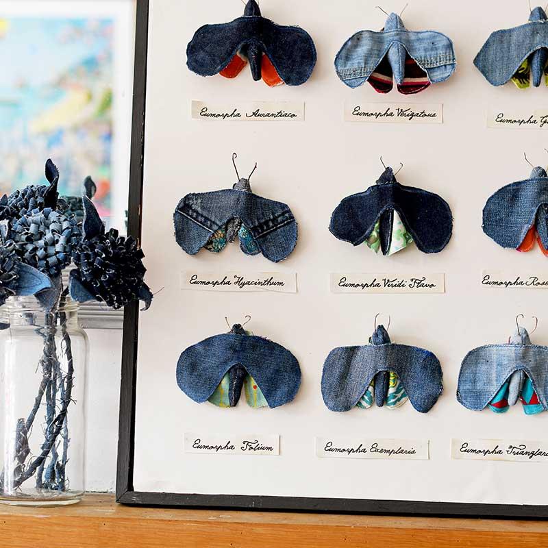 Framed faux moth specimen display
