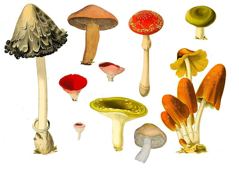 Printable Mushroom collection