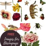 Free nature decoupage images