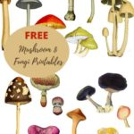 Free printable mushroom and fungi