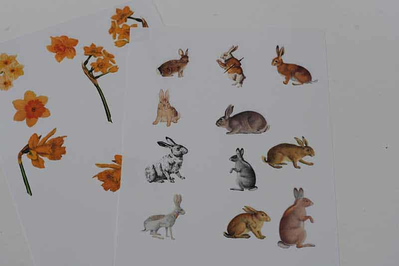 rabbit and daffodil clip art