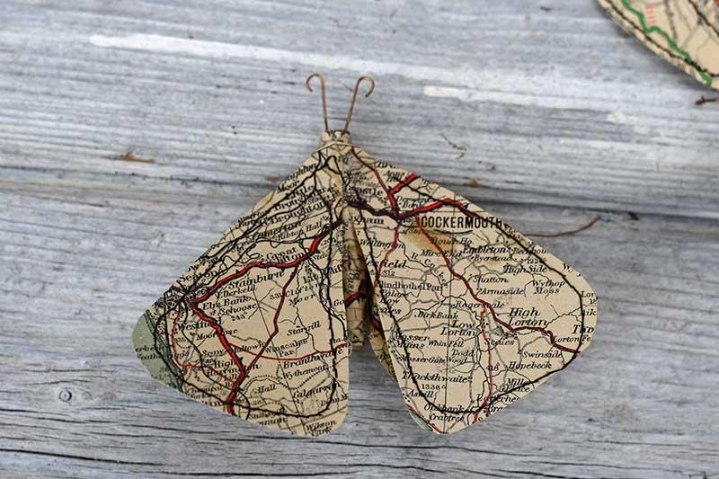 map paper moth