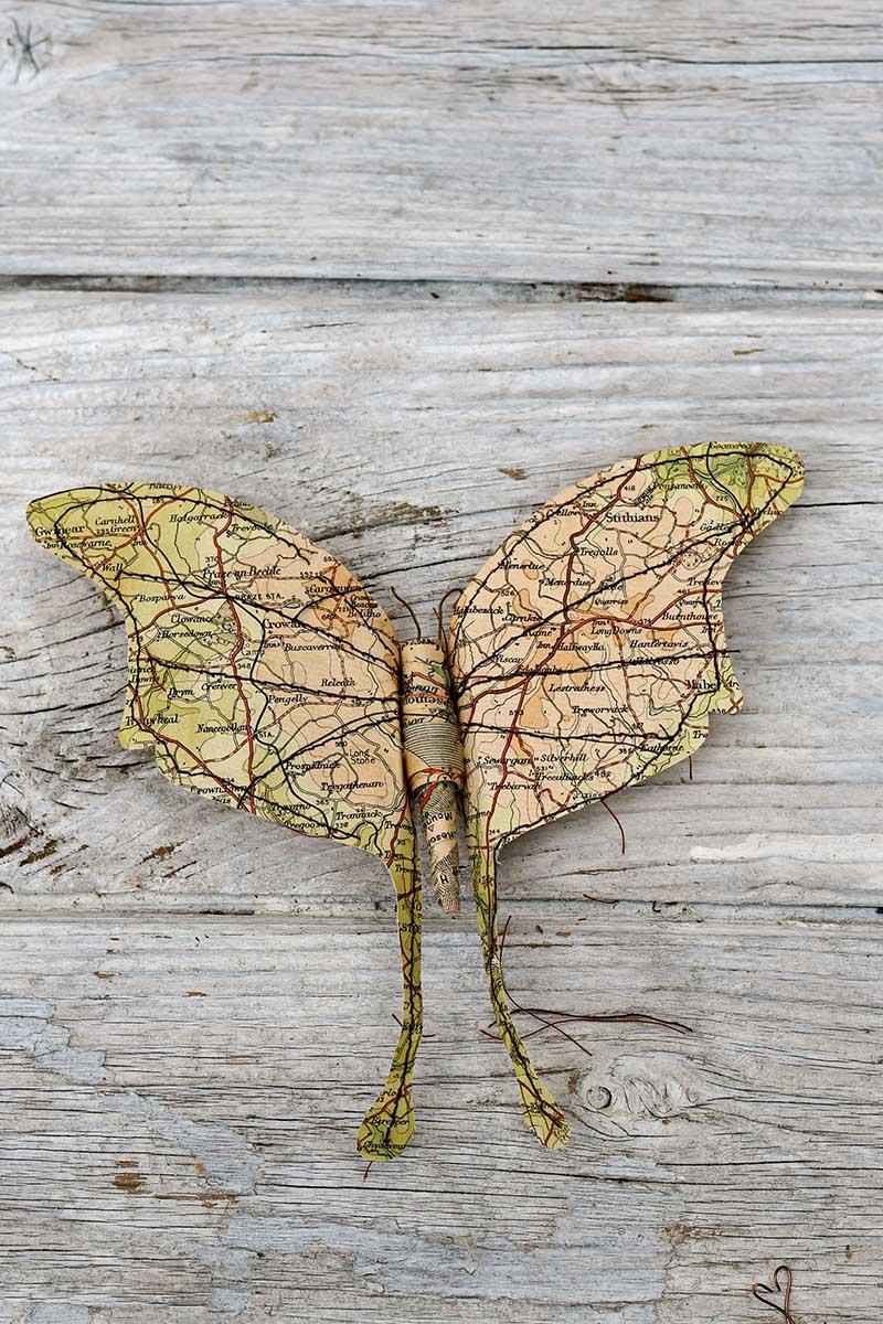 Large wing moth