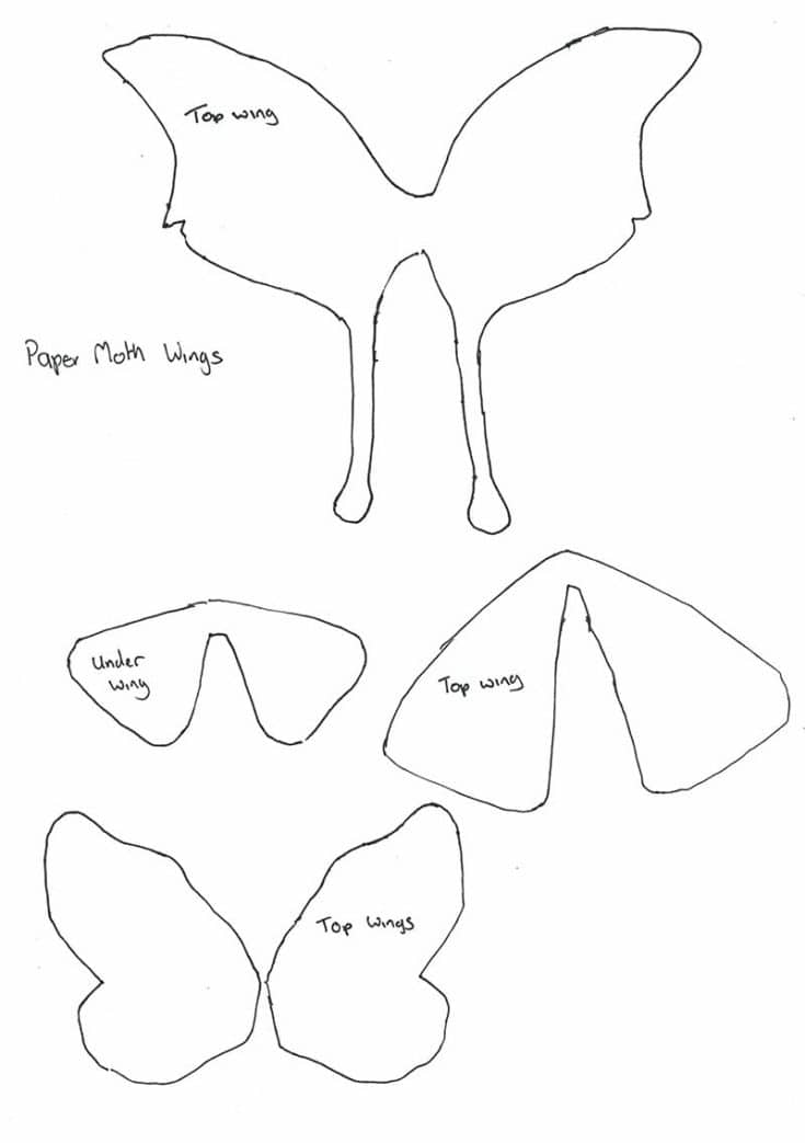 paper-moth-wing-template