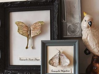 two-framed-paper-moths-mantle